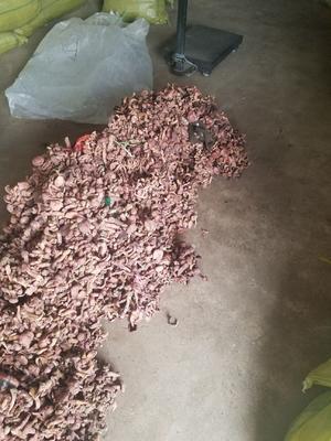 河北省承德市平泉县红蘑菇 野生 干货