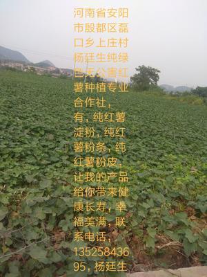 河南省安阳市殷都区红薯淀粉