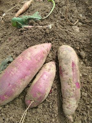 河南省南阳市方城县紫罗兰紫薯 6两~1斤
