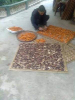 四川省广元市朝天区原木干香菇 袋装 1年