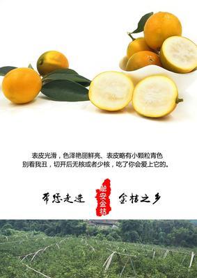广西壮族自治区柳州市融安县脆皮金桔 5-6cm 1.5-2两