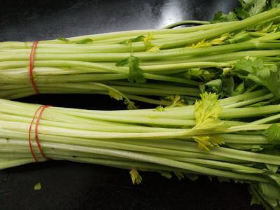 安徽省蚌埠市怀远县香芹 40~45cm 大棚种植 0.5斤以下