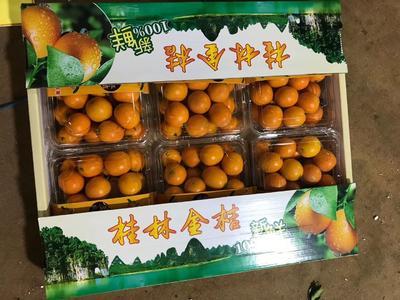 广西壮族自治区桂林市阳朔县桂林金桔 2-3cm 1两以下