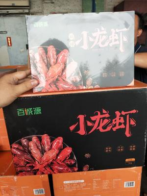 广东省佛山市顺德区冻小龙虾
