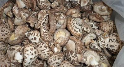 广西壮族自治区桂林市兴安县花菇干 散装 1年以上