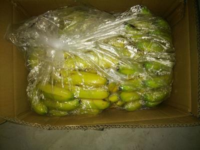 河北省邯郸市丛台区威廉斯香蕉 八成熟