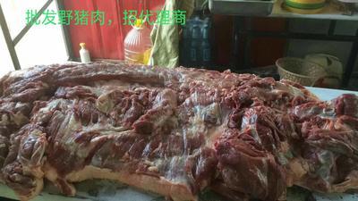 山东省济宁市兖州区野猪肉 生肉