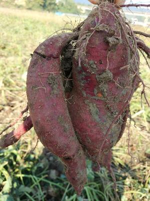 湖南省长沙市浏阳市紫罗兰紫薯 混装通货