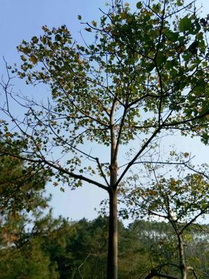 广西壮族自治区来宾市兴宾区干杂木
