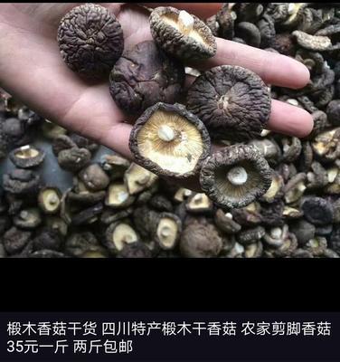 四川省绵阳市江油市普通干香菇 散装 半年