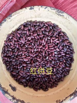 甘肃省酒泉市肃州区大红豆