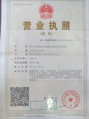 江苏省宿迁市宿城区法国皇后芹菜 60cm以上 大棚种植 0.5斤以下