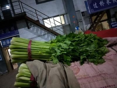 河北省邯郸市丛台区法国皇后芹菜 45~50cm 大棚种植 0.5斤以下