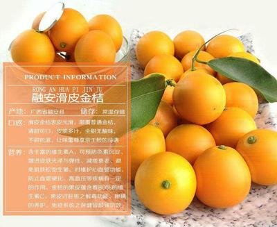 广西壮族自治区柳州市融安县滑皮金桔 2-3cm 1两以下
