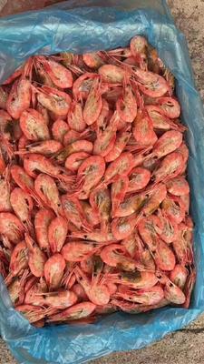 黑龙江省牡丹江市绥芬河市加拿大甜虾 野生 2-4钱