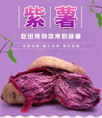 河南省南阳市社旗县紫罗兰紫薯 3两~6两