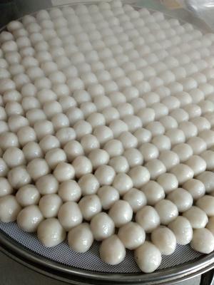 吉林省长春市德惠市粘豆包 2-3个月