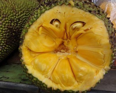 海南省海口市琼山区海南菠萝蜜 15斤以上