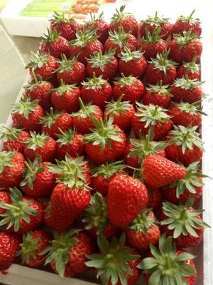 内蒙古自治区赤峰市元宝山区奶油草莓 30克以上