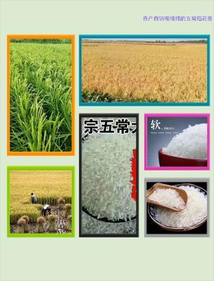 黑龙江省佳木斯市富锦市五常稻花香二号稻谷 晚稻