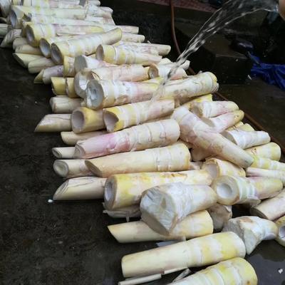 云南省昆明市呈贡区竹笋干 散装 1年以上