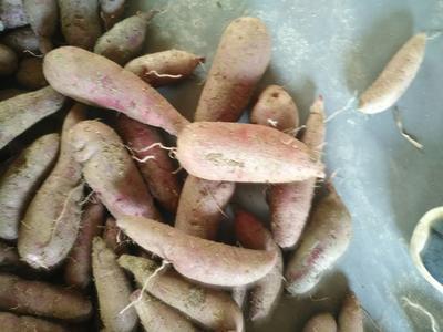 江西省抚州市南丰县紫罗兰紫薯 3两以下