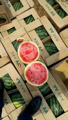 陕西省渭南市大荔县甜王西瓜 有籽 1茬 9成熟 15斤打底