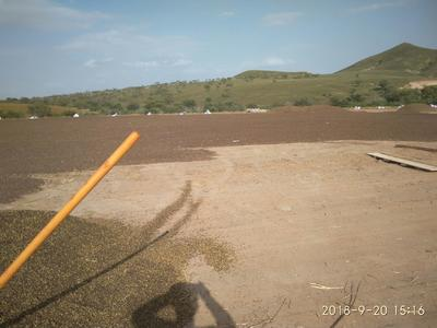 内蒙古自治区赤峰市巴林左旗普通荞麦