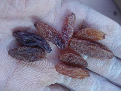 新疆维吾尔自治区哈密地区哈密市红香妃葡萄干 统货
