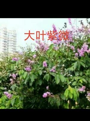 骞夸笢鐪� 1564 鎻槼甯傛櫘瀹佸競绱枃鏍�