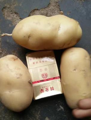 内蒙古自治区包头市达尔罕茂明安联合旗冀张226土豆 3两以上