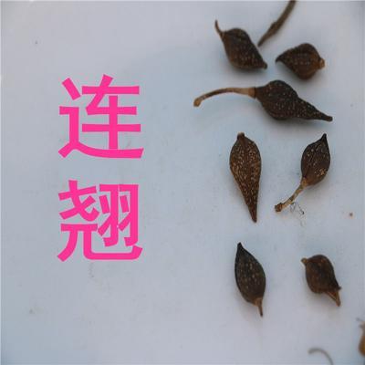 甘肃省定西市渭源县连翘