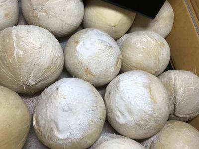 广东省深圳市福田区泰国香水椰 1.5 - 2斤