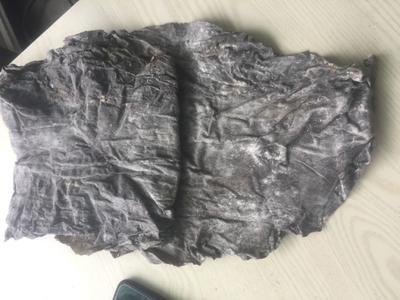 福建省莆田市秀屿区野生海带