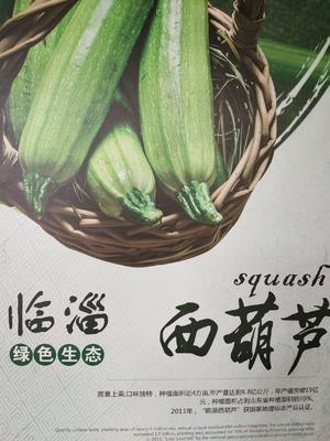 山东省淄博市临淄区绿皮西葫芦 1斤以上