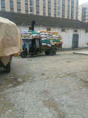 湖北省随州市曾都区黄花粘 中稻