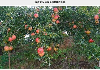 山东省临沂市蒙阴县红石榴 0.3 - 0.5斤