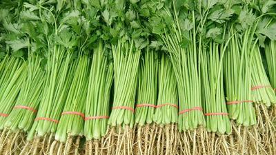 山东省聊城市东阿县香芹 55~60cm 大棚种植 0.5斤以下