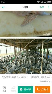 广东省肇庆市高要市鹅肉类 冷冻