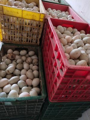 江西省上饶市广丰县青皮鸭蛋 食用 散装