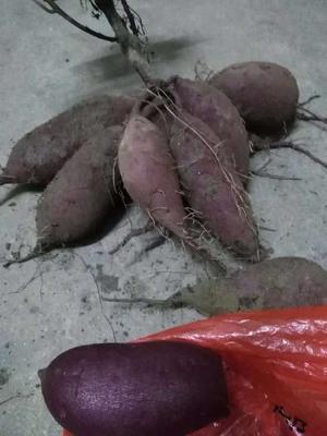 江西省赣州市石城县越南紫薯 混装通货