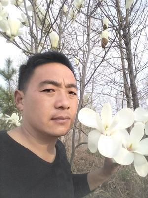 河南省商丘市梁园区白玉兰