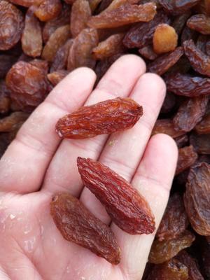 新疆维吾尔自治区吐鲁番地区吐鲁番市红香妃葡萄干 一等