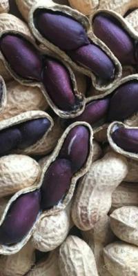 这是一张关于黑花生 干货 带壳花生的产品图片
