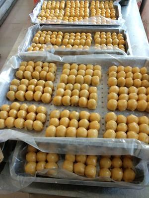 吉林省长春市德惠市粘豆包 3-6个月