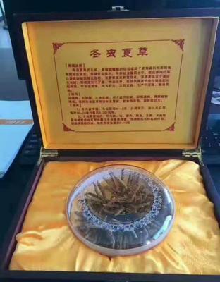 这是一张关于藏红花花丝的产品图片