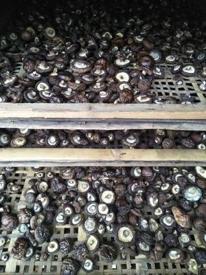 陕西省商洛市商南县黑面菇干 袋装 1年以上