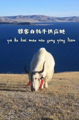 甘肃省武威市天祝藏族自治县天祝白牦牛 800-1000斤 统货