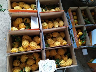这是一张关于赣南脐橙 80-85mm 8两以上的产品图片