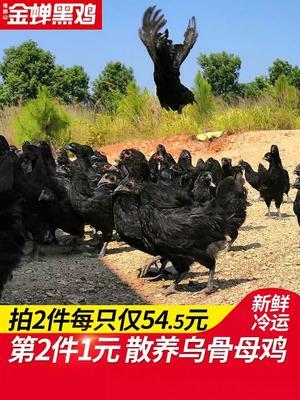 湖南省永州市道县土乌鸡 2斤以下